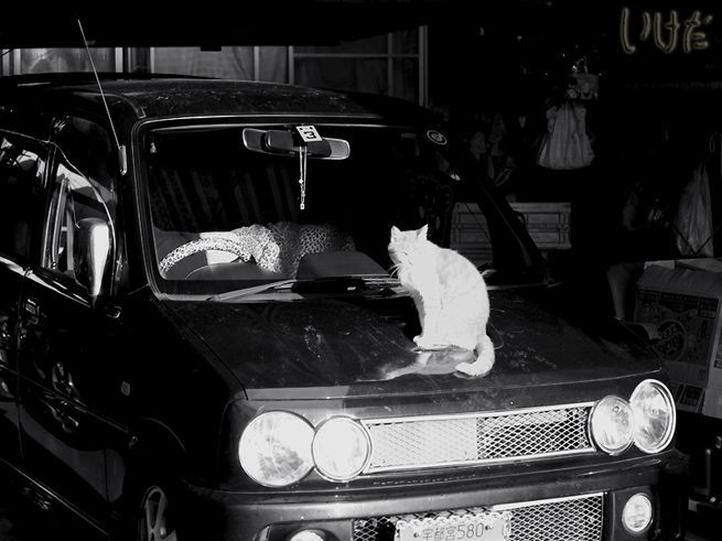 black car white cat