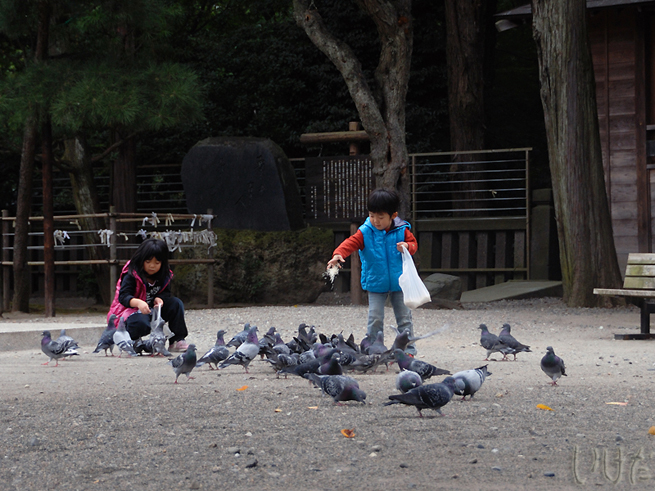 feeding the birds at futara